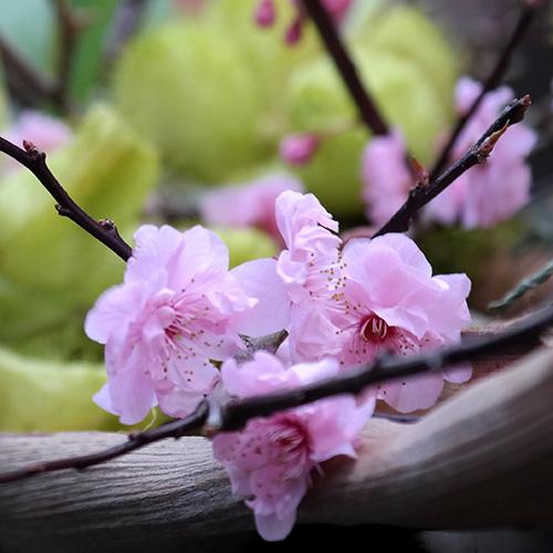 Rouwboeketten en afscheidsbloemen