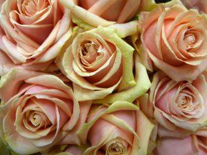 workshop bloemcreatie henry fantin-latour