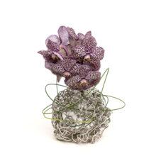 Boldesign in zilver met orchidee