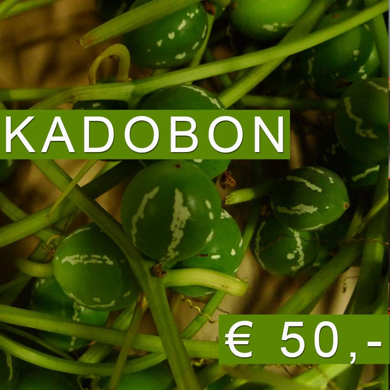 Kadobon 50 euro bij Blomatelier