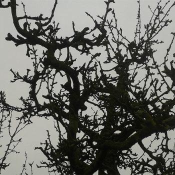 kerst perenhout