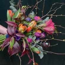 Boskoopsglorie tulpen